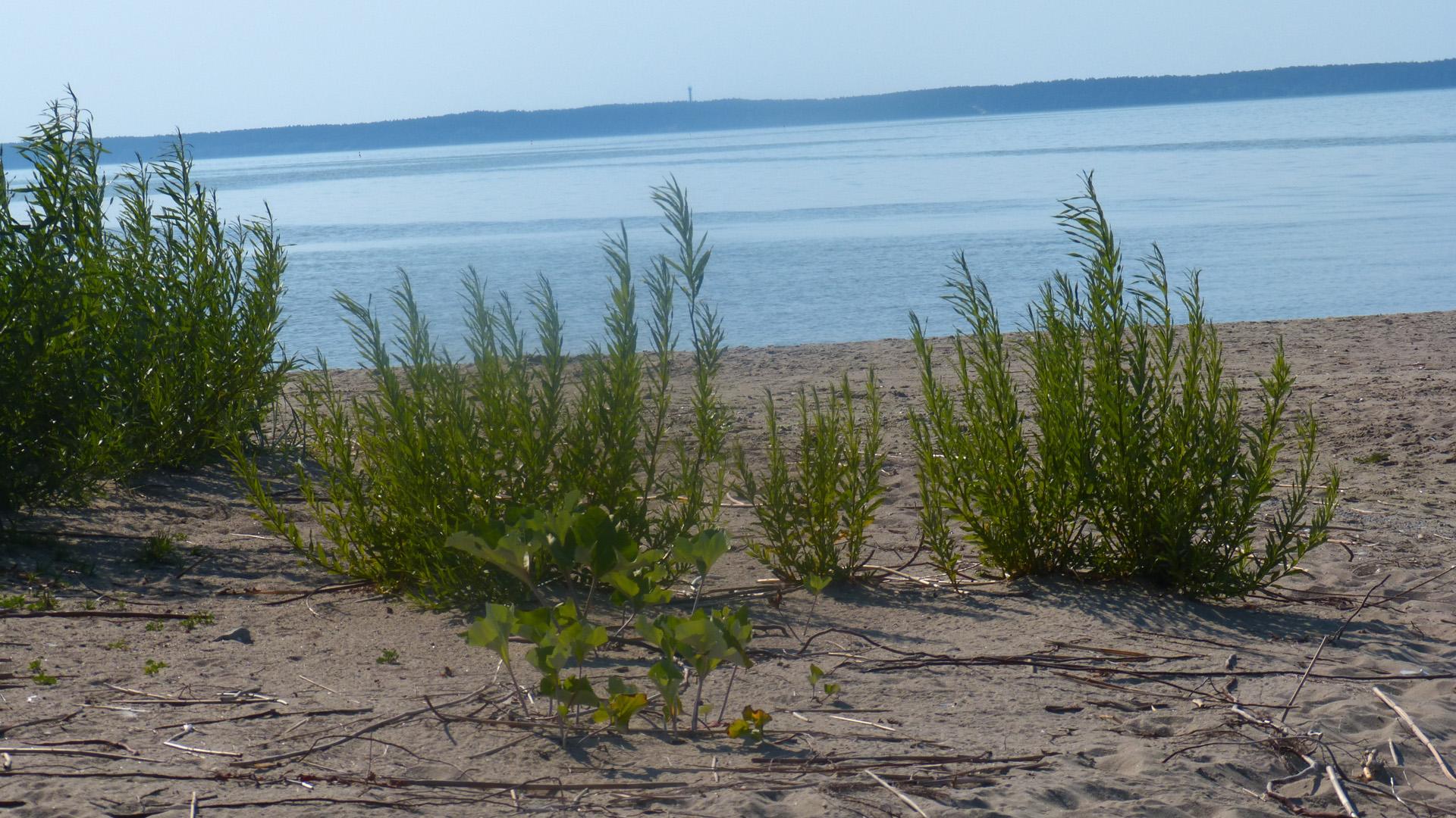 Zalew Wiślany - plaża